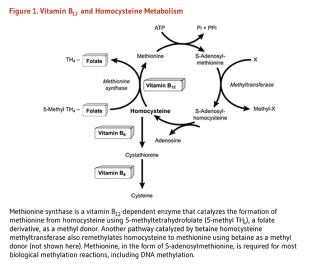 vitaminb12_figure1_v3